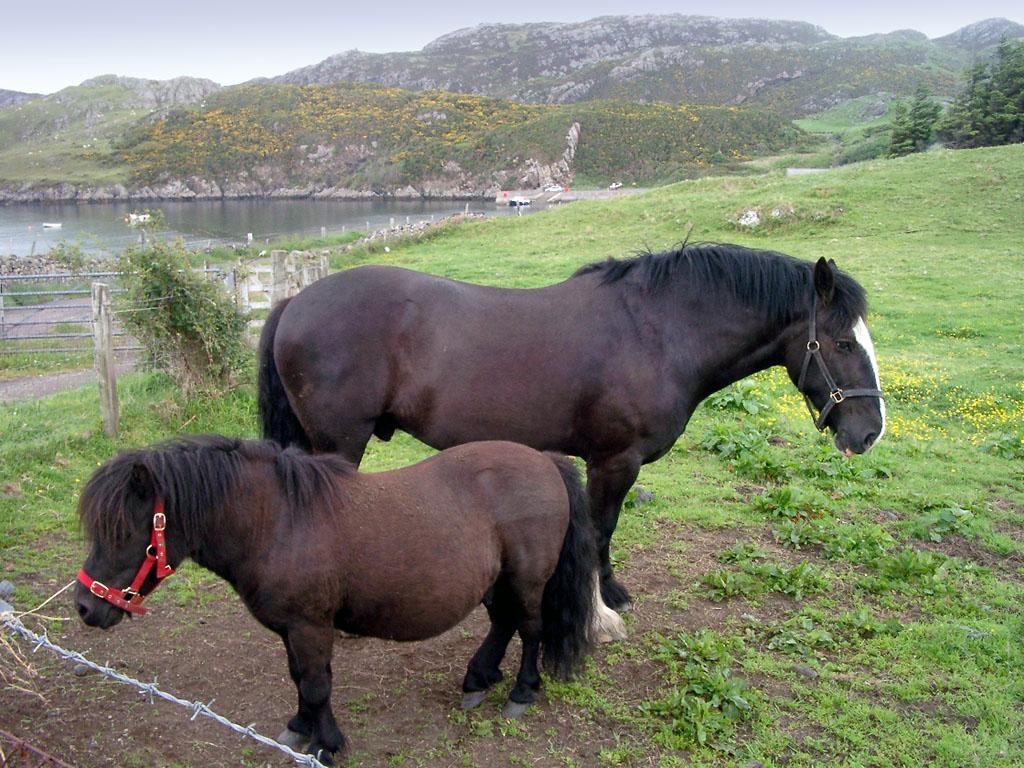 Pferde am Straßenrand