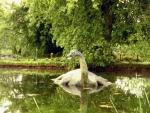 Nessi Loch Ness