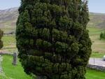 alter Friedhof auf Skye bei Broadford