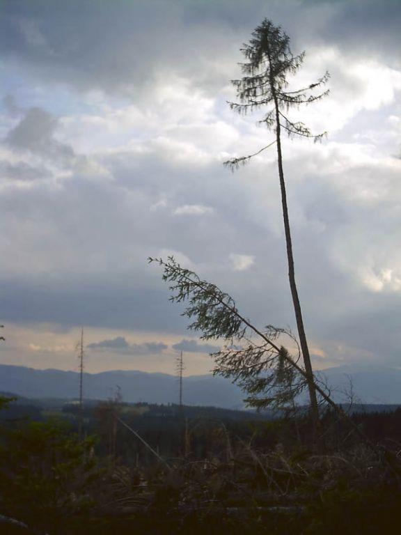 Sturmschäden